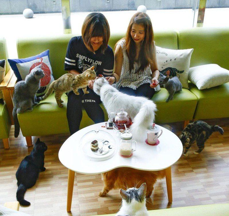 中和環球購物中心推出百貨獨家的「貓樂貓咖啡」。圖/摘自貓樂貓咖啡粉絲團