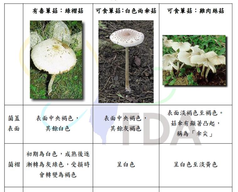 「綠褶菇」常被當成一般可食用的「白色雨傘菇」。圖/食藥署提供