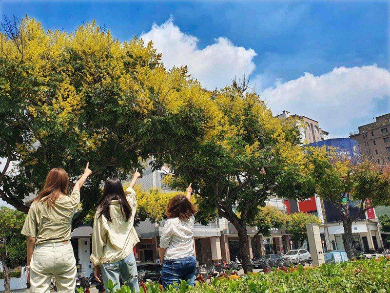 秋天到了,台中市多處公園綠地、行道上的台灣欒樹悄然盛開,台灣欒樹有四色樹之美譽,每年的9月開始綻放出美麗耀眼的金黃色。圖/台中市建設局提供