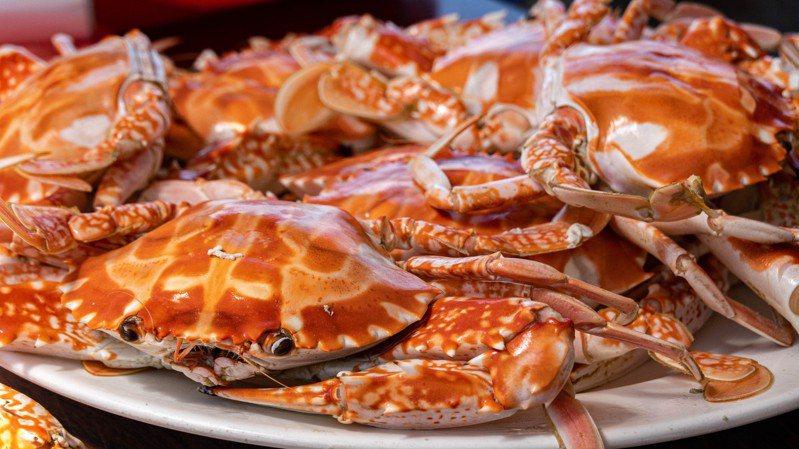 新北市「野柳假日活蟹市集」今天開幕,萬里蟹蒸煮後紅通通,飄出濃郁香氣。圖/新北市政府提供