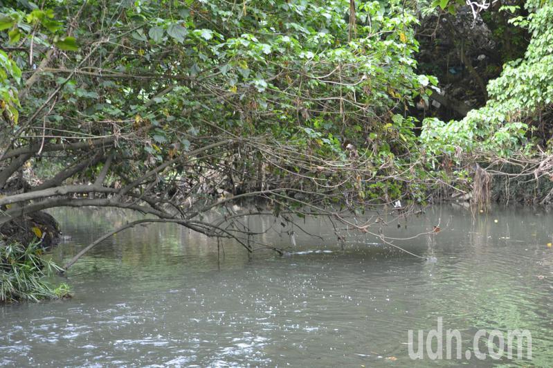 台南市南區體育公園旁的哈赫納爾森林,是城市中少見的荒野森林。記者鄭惠仁/攝影