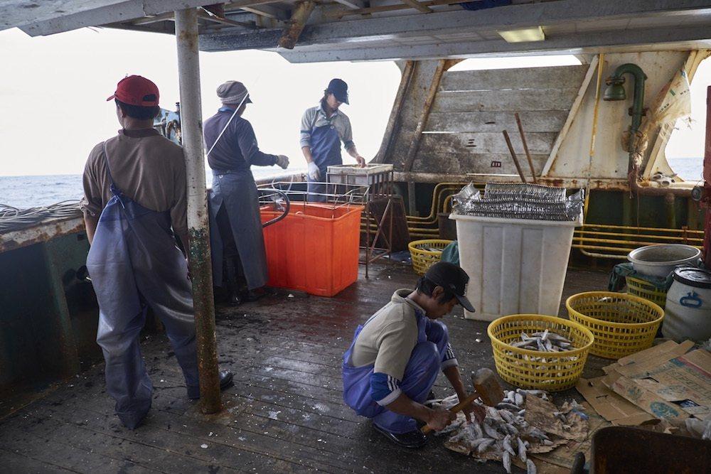 美國勞動部首次將台灣漁獲名列「童工及強迫勞動製品清單」中,環團認為恐影響我國漁獲出口進入美國,圖/綠色和平組織提供