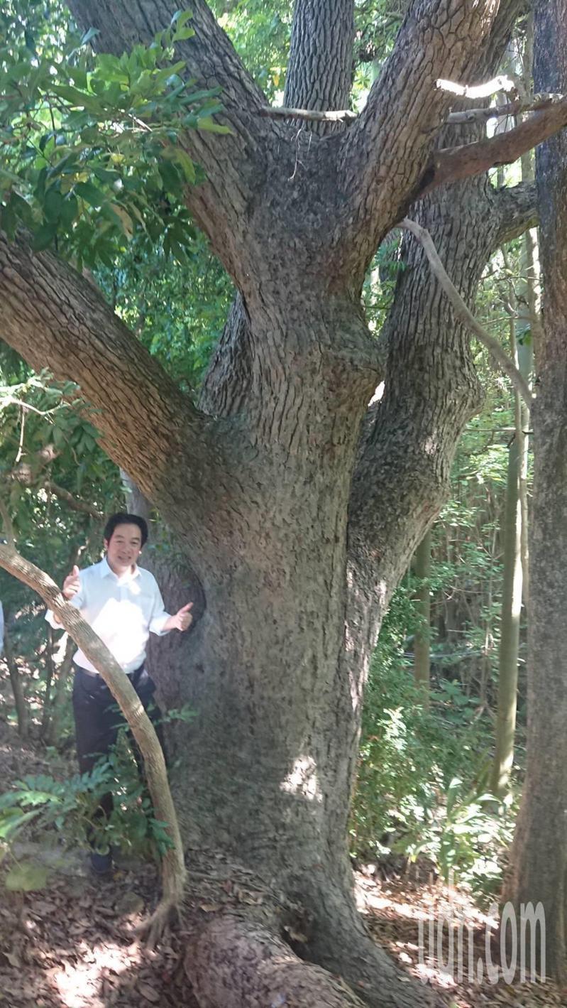 副總統賴清德今天與環保、文化界人士走進台南市南區哈赫納爾森林,與上百年樟木合影。記者鄭惠仁/攝影