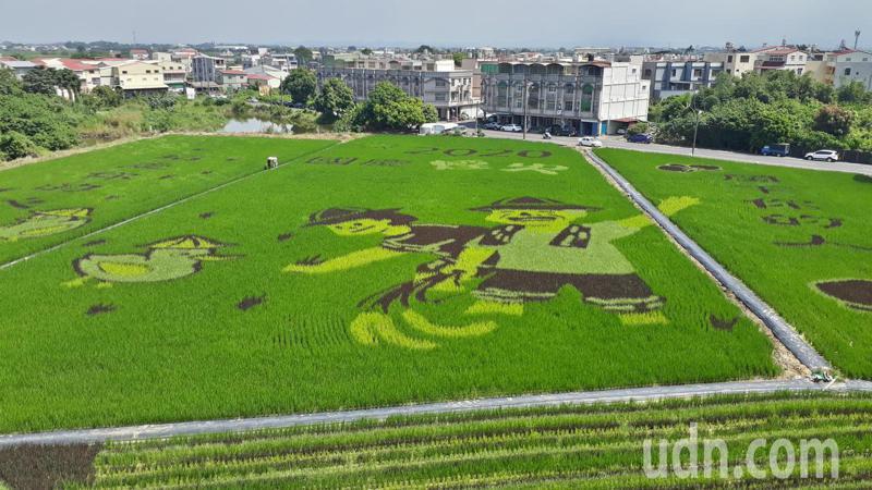 台南好米季雙連假登場,台南後壁農會歡迎大家來觀賞美麗的彩繪稻田。記者周宗禎/攝影