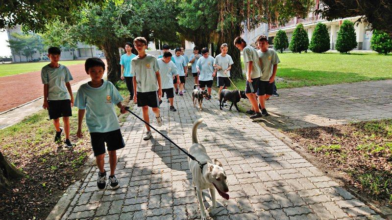 全台三千多所學校,有校犬貓的總學校數不到300所。圖為雲林縣大埤國中學生志工照顧校犬。圖/大埤國中提供