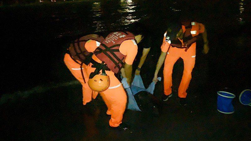 民眾今天凌晨在西子灣發現兩隻擱淺海豚,通報岸巡五大隊人員即刻救援。圖/岸巡第五大隊提供