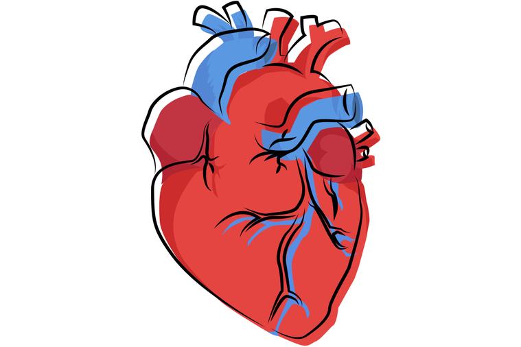 主動脈剝離之所以會發生,簡單地說就是,當血壓高過於主動脈管壁所能承受的限度,血液...