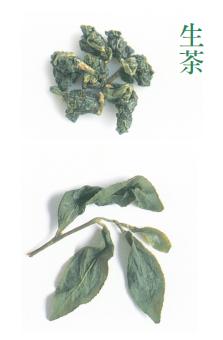 生茶:烘焙前的茶葉保有高山茶特有的高雅香氣與鮮味。外觀很翠綠,莖梗也呈現淡綠色。...