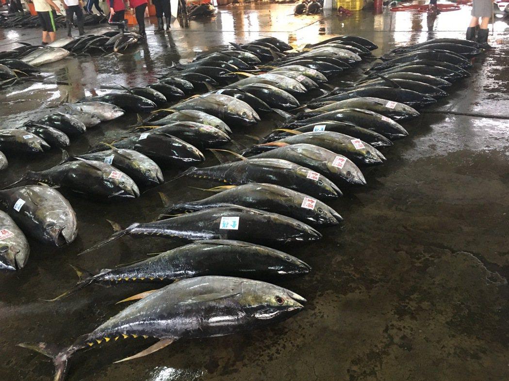 曾有專家預估,若人類再不克制,到了2048年大海終將無魚可撈。