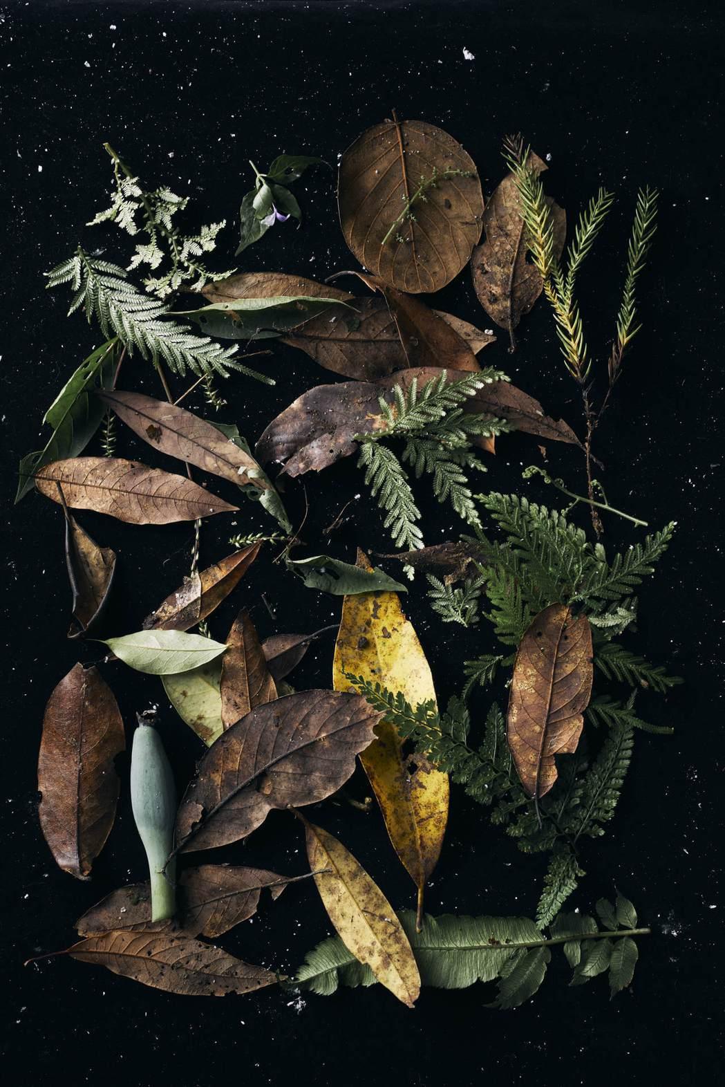 從落葉與腐質層中隨手收集的樹葉,從小觀大都是美。 圖/陳敏佳提供
