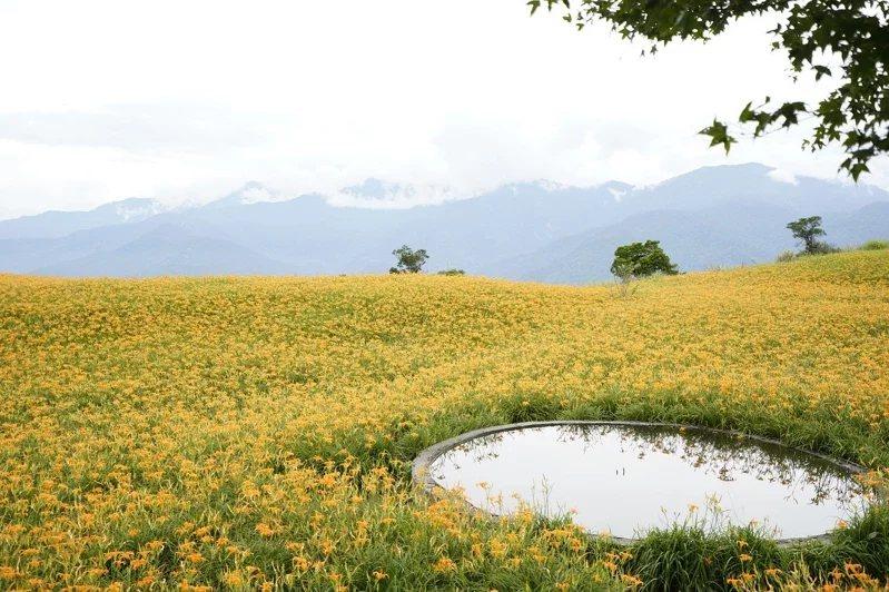 國慶連假期間,也進入金針花賞花尾聲。  圖/Expedia提供