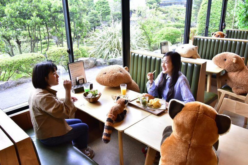 後疫情時代小確幸!日本貓星人、水豚和小熊貓出動  勿忘保持安全社交距離