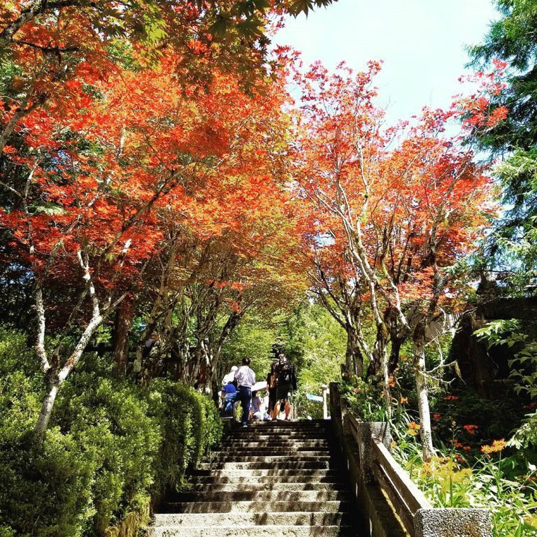 ▲北部賞楓景點-太平山。 (圖/alien0087, Instagram)