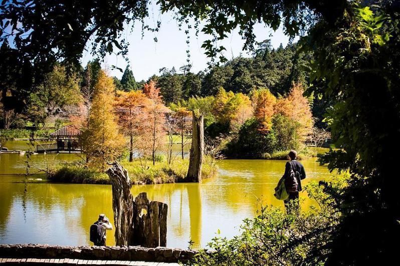 ▲北部賞落羽松景點-宜蘭明池森林。 (圖/Tripbaa趣吧!自由行專家)