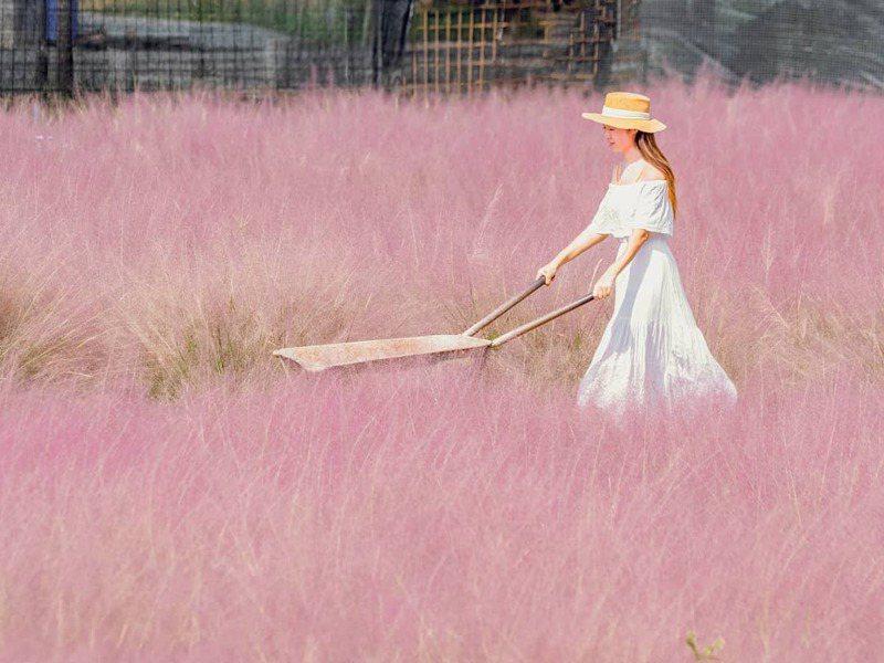 ▲粉黛亂紫草-和平快樂田園。 (圖/molly888666, Instagram)