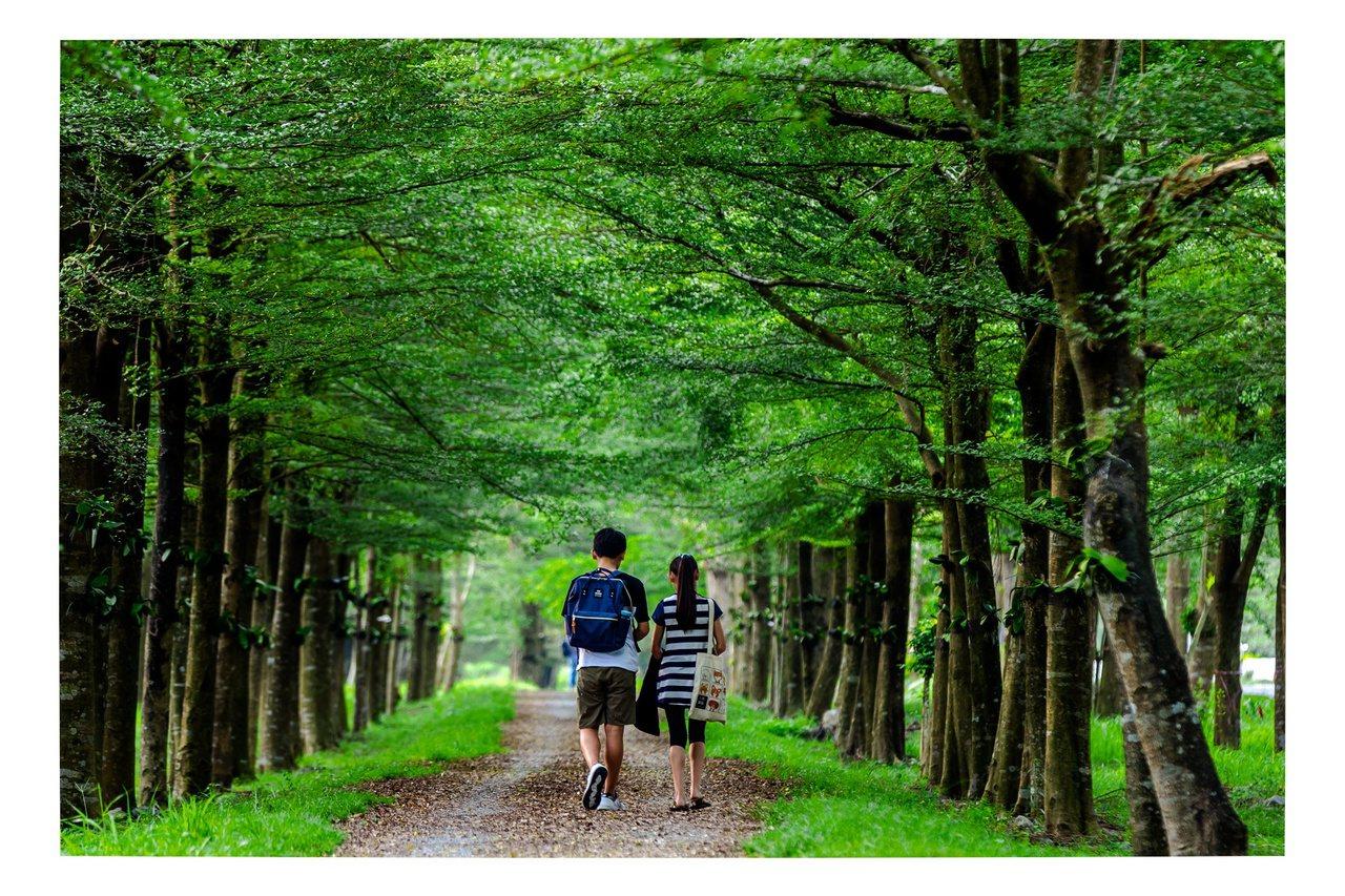 民眾到潮州近郊的林後四林平地森林園區,可悠閒地漫步在樹種多元的平地森林。 圖/南...