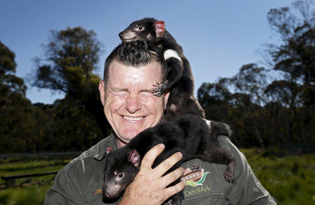 在過去,袋獾曾因被認為可能咬殺家畜,因而遭人類大量獵捕,使得野生數量大減。根據粗...