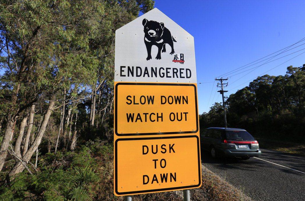 目前全世界只有在澳洲島州的塔斯馬尼亞,可以發現野生袋獾,也因此塔斯馬尼亞的國家公...