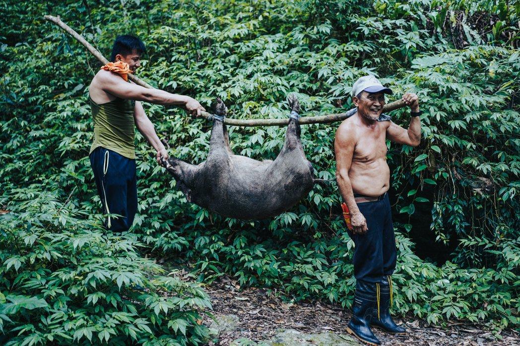 某次巧遇捕獲野生山豬的獵人,開心地扛著獵物離開山蘇森林。 圖/TaiTai LI...