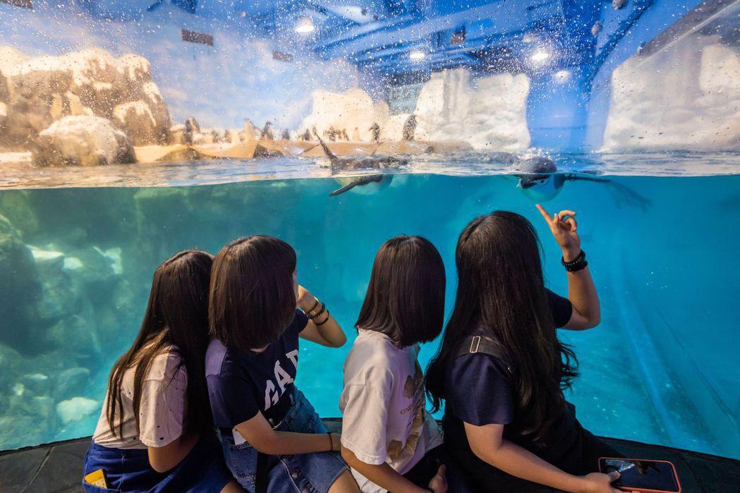 屏東海生館極地水域區吸引民眾目光。  屏東海生館 提供