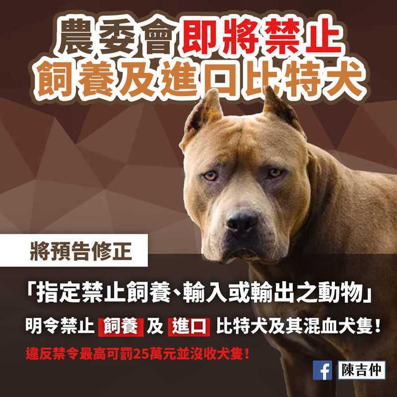 農委會公告將修法禁止飼養及進口比特犬,包括比特犬及其混血犬隻等具攻擊性的大型犬。記者魯永明/攝影