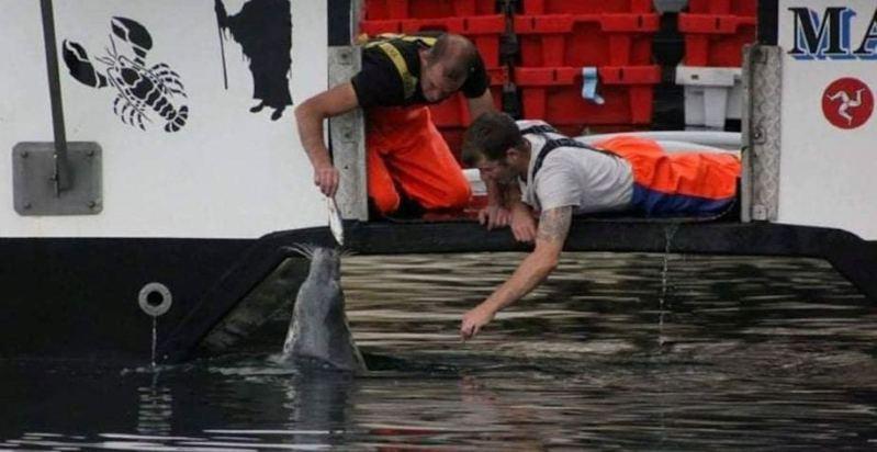 英國一名漁夫跟海豹建立起10年情誼,直到今年海豹雙眼全盲,仍一如往昔天天來找漁夫。 。圖/取自goodnewsnetwork