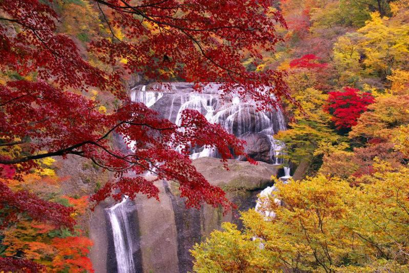 日本三大名瀑之一的袋田瀑布秋楓勝景。 圖/日本茨城縣提供