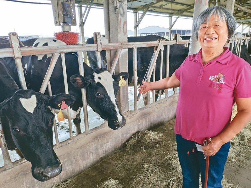 曾任農委會畜產試驗所研究員的李美珠,在台南柳營養牛,上演「博士養牛」傳奇。 記者謝進盛/攝影