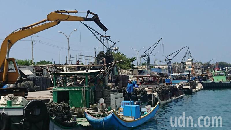 台南牡蠣養殖季開始,漁光島蚵農忙著把蚵苗吊上船筏,準備載到養殖區吊掛。記者鄭惠仁/攝影