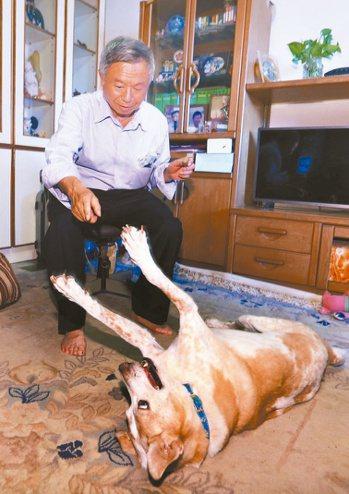 楊志良與愛犬六一的互動非常有趣。 記者杜建重/攝影