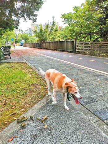 楊志良常帶著六一出門散步。圖╱楊志良提供