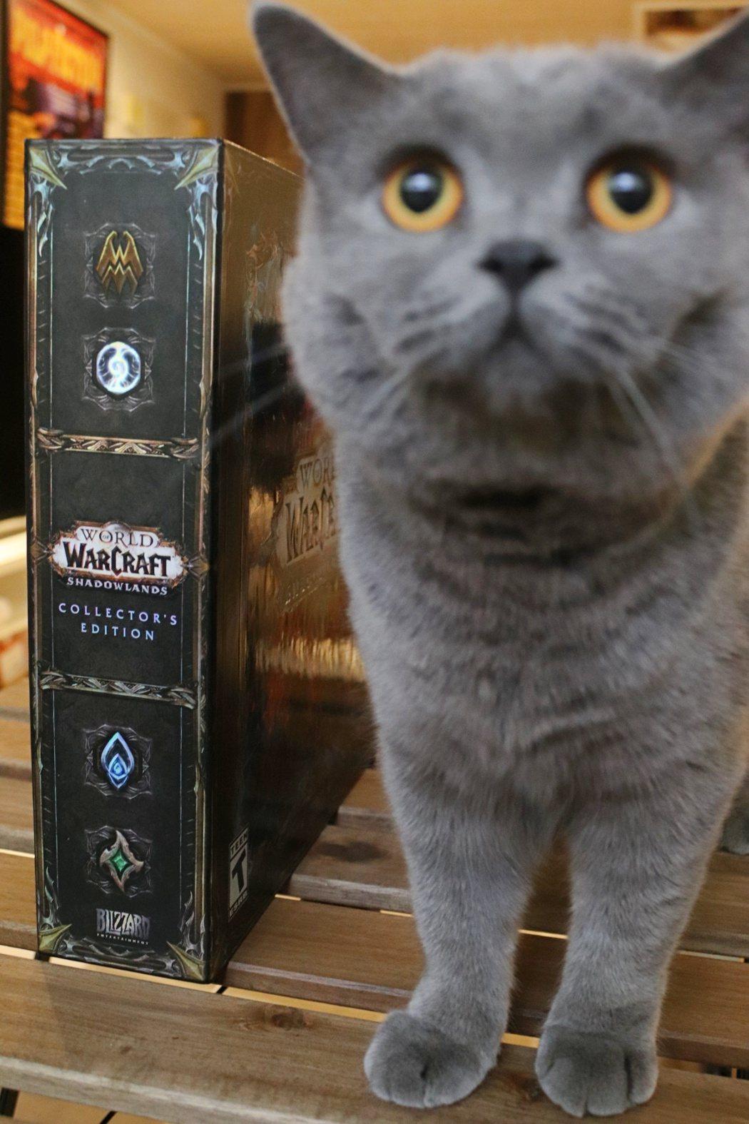 請忽略這隻貓
