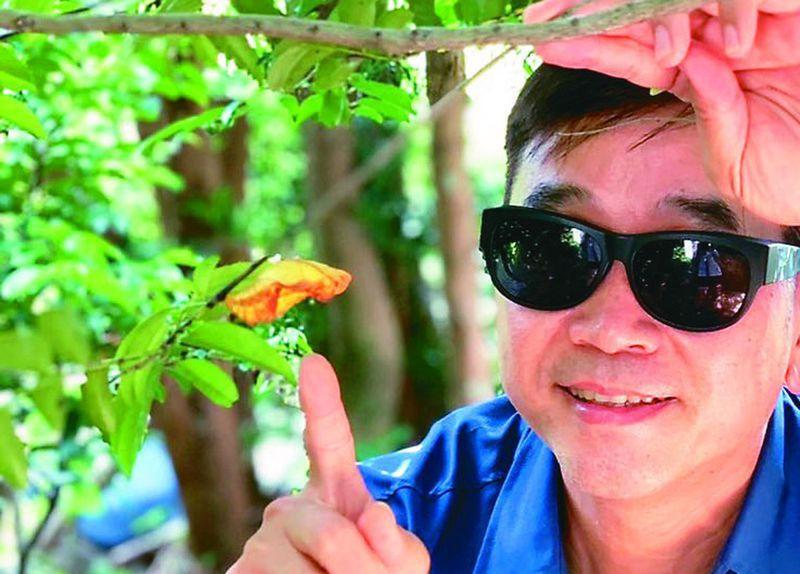 台東大學教授李偉俊,中秋連假到蘭嶼訪查,全島只找到一顆珠光鳳蝶的蛹。圖/李偉俊提供