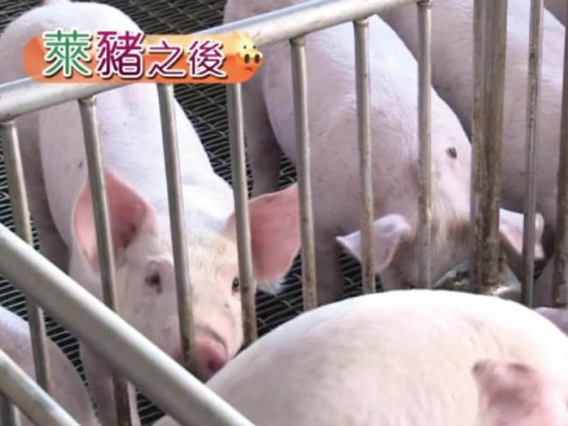 台灣豬肉可以外銷了,是民進黨政府開放瘦肉精美豬進口之後再三強調的所謂利多,但事情真有那麼樂觀嗎?國內肉品商龍頭的嘉一香董事長陳國訓表示,這沒那麼簡單。記者游昌樺/攝影