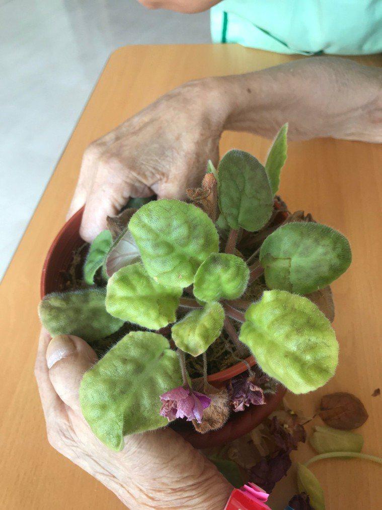 醫護人員在園藝治療活動中,協助患者學習4道人生習題,讓病人及家屬放下遺憾,園藝創...