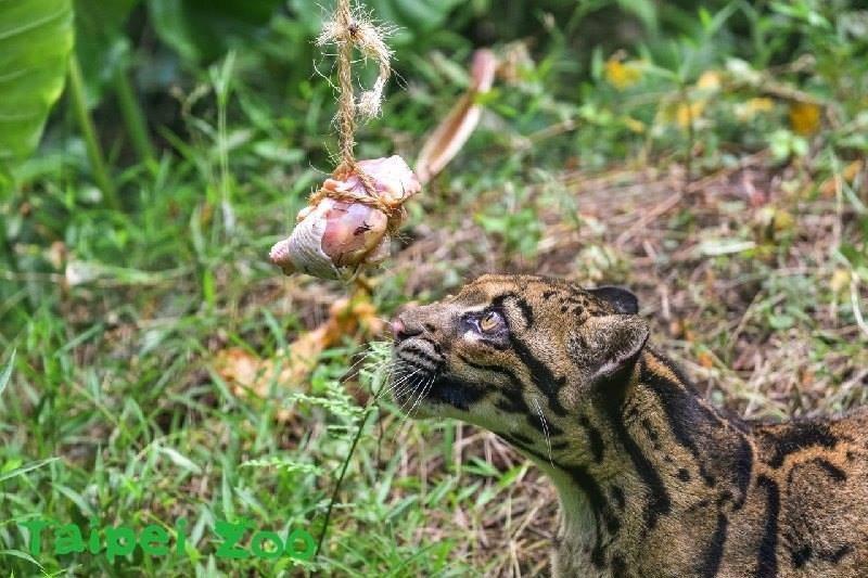 人類喜歡餵食動物的原因之一,或許是餵動物讓人們與動物有近距離接觸的機會。 圖/Taipei Zoo臺北市立動物園