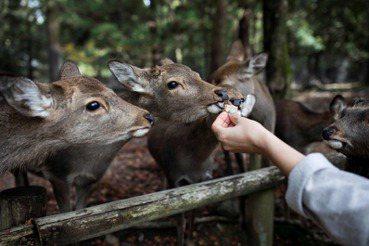 蕭人瑄/餵牠是為牠好?餵食之外,更對等的跨物種接觸(上)