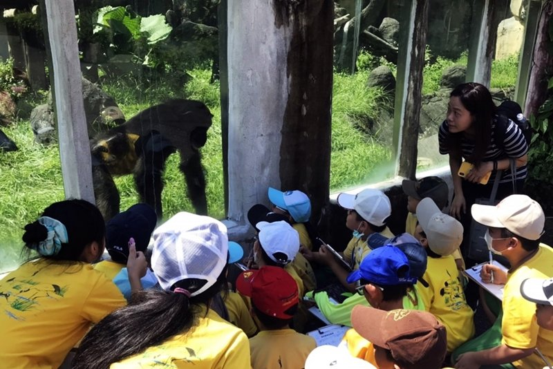 孩子在黑猩猩面前蹲低安靜地觀察,十分珍惜黑猩猩靠近他們的時光。 圖/張菁砡、鍾嘉怡提供