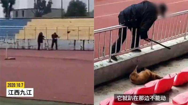 日前在中國江西九江的一名高中學生稱,兩名穿制服人員用鐵鍬擊打流浪狗,直至其無法動彈。 圖截自/香港01