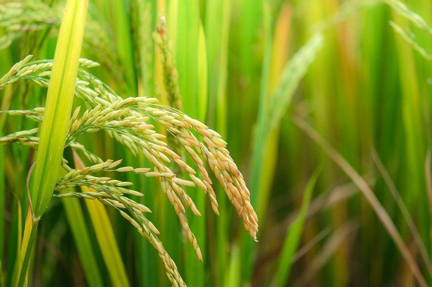 「世界廚房」的泰國,鮪魚罐頭、鳳梨罐頭等多種食品出口,都居世界首位;大米和蔗糖則...