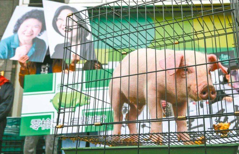 圖為養豬協會2016年到蔡英文競選總部表態反對開放美豬。本報資料照片