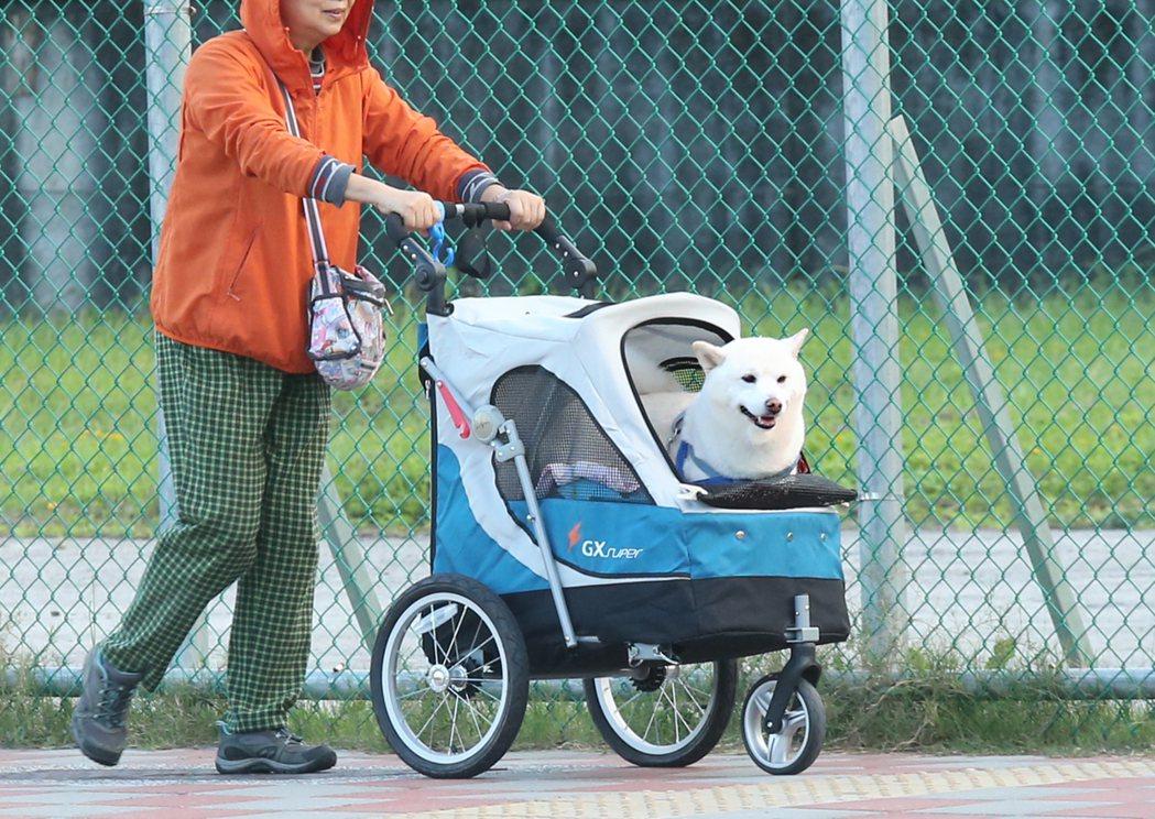 台灣走向少子化,「毛小孩」反而成為許多人士家中成員,旅行社搶國旅商機,新推出寵物...