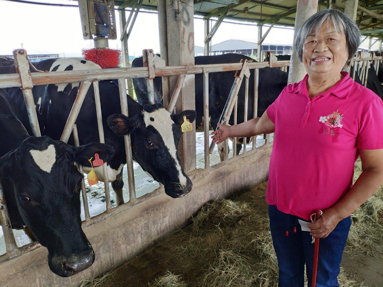 曾任農委會畜產試驗所研究員李美珠,在台南柳營養牛,上演「博士養牛」傳奇。 圖/謝...