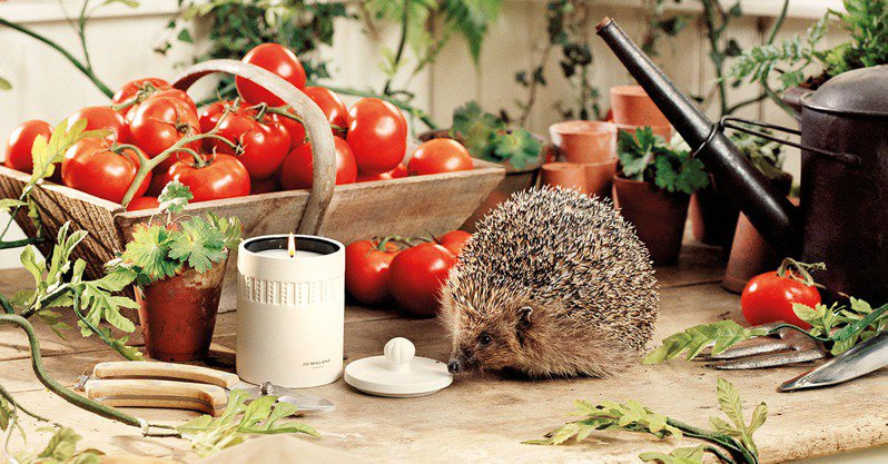 Jo Malone London Townhouse綠番茄藤香氛工藝陶瓷蠟燭/300g/4,590元。圖/Jo Malone London提供