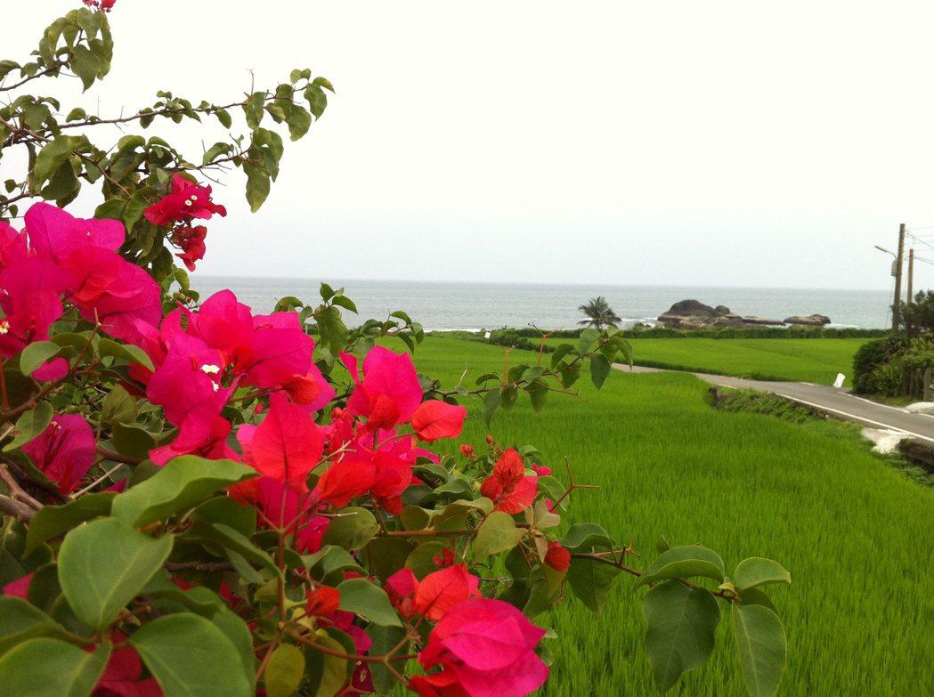 石梯坪小旅行中也帶旅人參觀海稻米復育狀況。圖/游智維提供