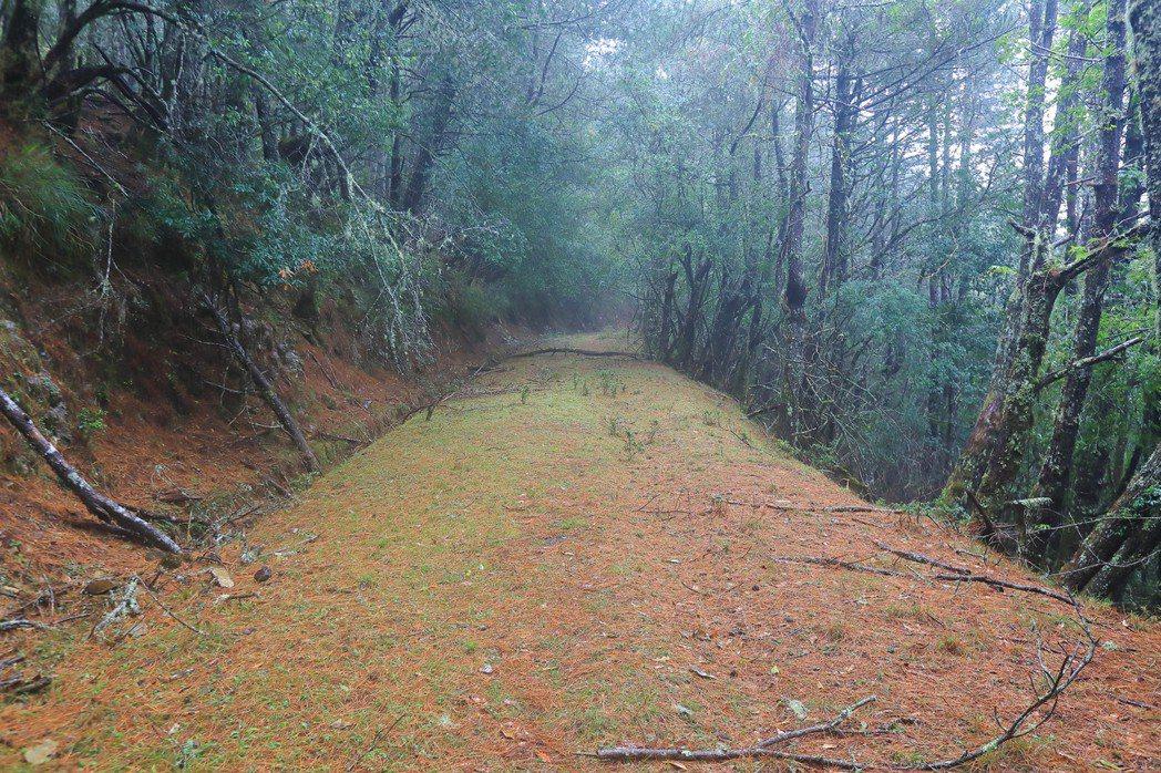 郡大林道未通車路段一景。台灣擁有超過3000公里長的林道系統,雖然大多無法通車,但多數路況仍非常適合健行與單車,值得活化推廣。 圖/作者自攝