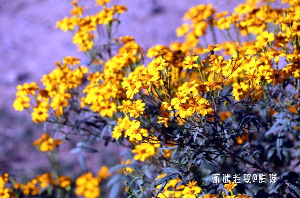今年閏月中秋過後,進入十月上旬,漫步在柿園四週,但未見花草枯黃,色彩依舊斑斕令人感慨,正可謂秋意漸濃,景色也平分秋色~