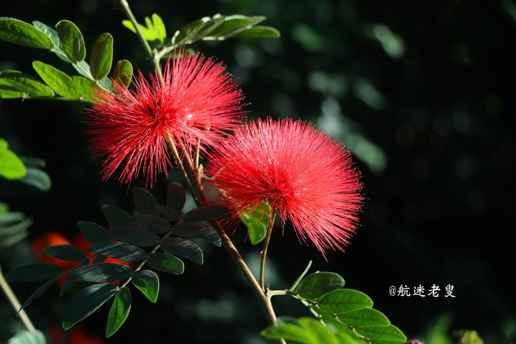 這次到新竹新埔賞曬柿風情,見到了很多平時難得一見的花卉,名字,有的知道,拍到至少三種慢慢來,先分享一些花朵的照片。