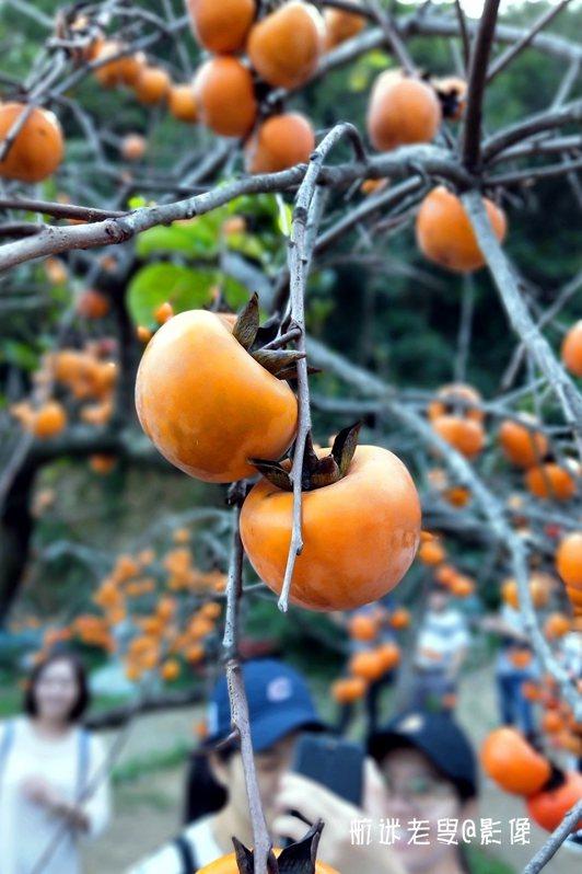 快樂出行,萬柿如意跟隨在左右,讓畫面更加和諧溫馨, 讓柿柿如意的人生更加出彩。