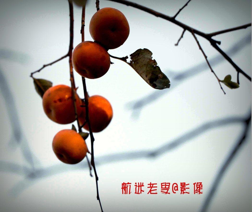 這個秋天,我以拍柿子為開端,色彩斑斕的秋色,秋的攝影季開始了,格友勿辜負美好光影。
